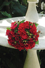 Timeless red roses from The Flowergirls Flower Shop