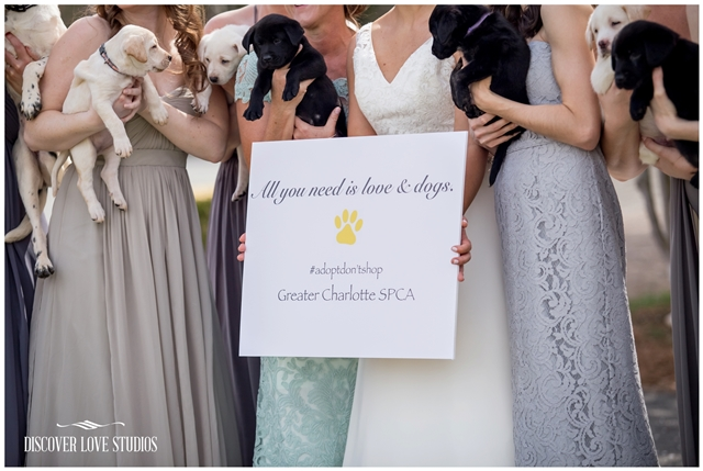 meghan butler pup themed wedding photos